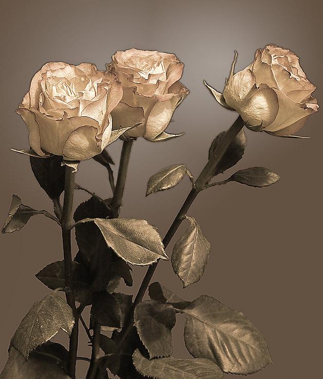 """фото """"Три розы (ред. 2)"""" метки: природа, цветы"""