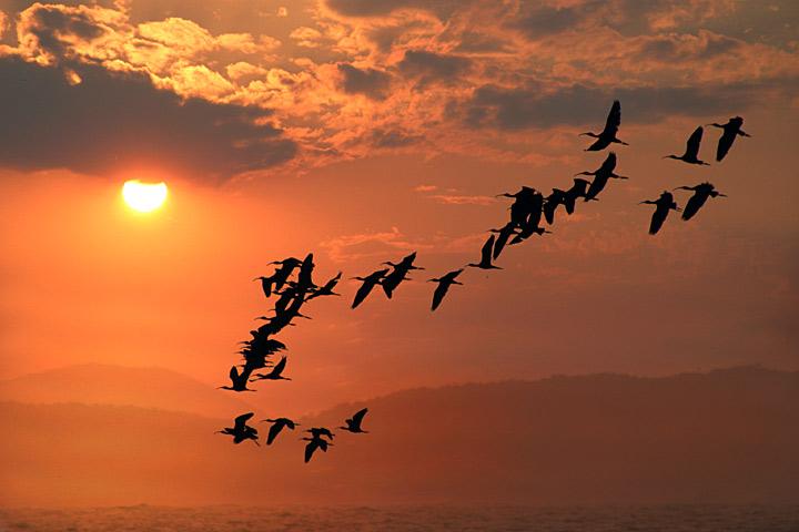 """фото """"Flight"""" метки: природа, дикие животные"""