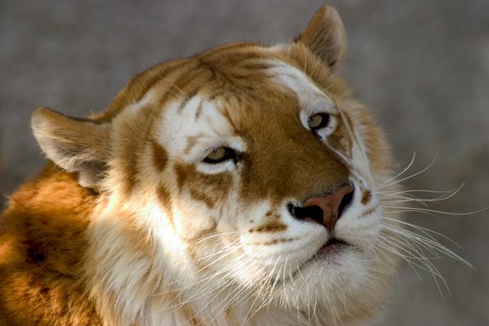"""фото """"beatifull amazing beast"""" метки: природа, дикие животные"""