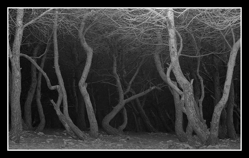 """фото """"Tree"""" метки: пейзаж, лес"""