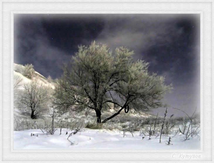 """фото """"Зимнее Древо под ночным небом"""" метки: пейзаж, зима, ночь"""