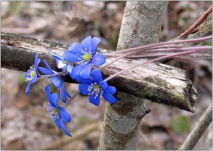 """фото """"О Вечном"""" метки: разное, природа, цветы"""