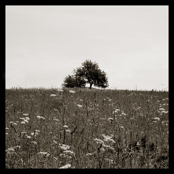 """фото """"one"""" метки: природа, черно-белые, цветы"""