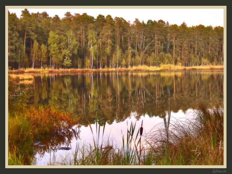 """фото """"Зеркало леса"""" метки: пейзаж, вода, лето"""