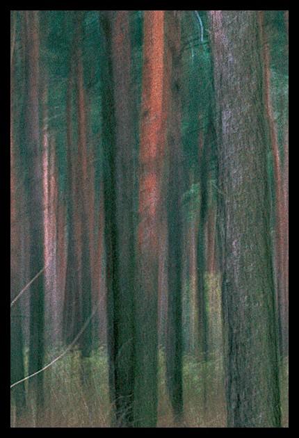 """фото """"Импрессионизм #10"""" метки: пейзаж, портрет, лес"""