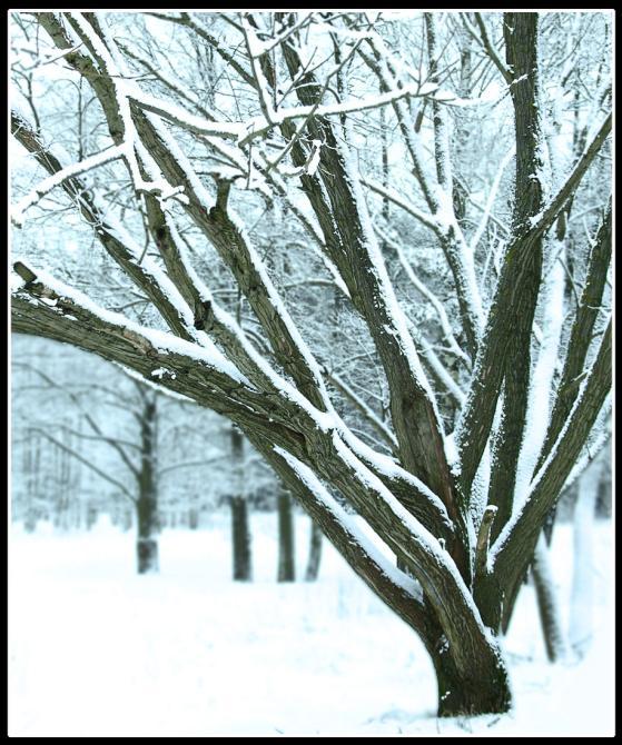 """фото """"..."""" метки: природа, пейзаж, зима, цветы"""