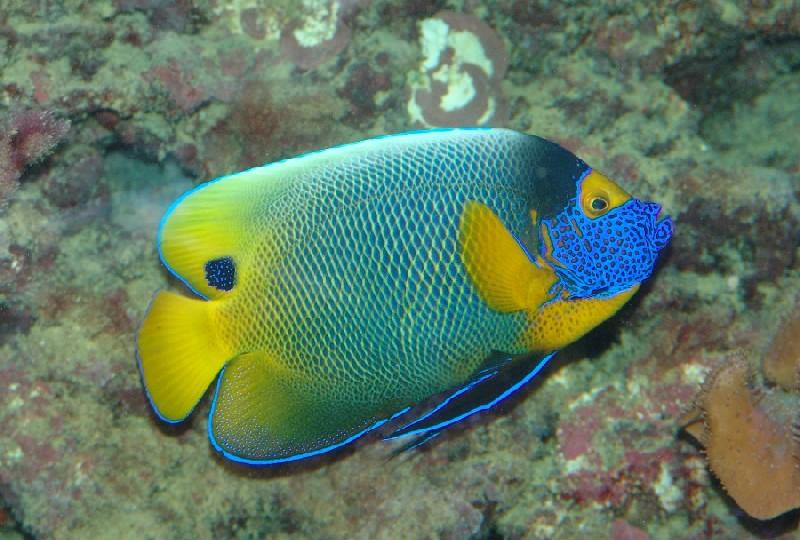 """фото """"Coloured fish"""" метки: подводные, природа,"""