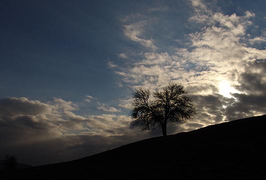 """фото """"Tree in the clouds"""" метки: природа,"""