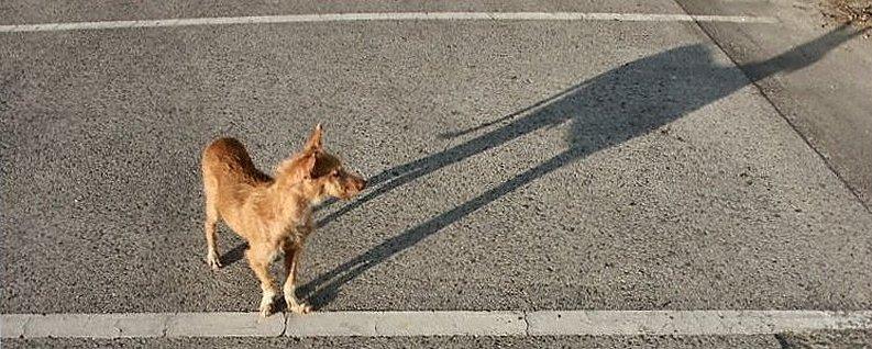 "фото ""The dog and the shadow"" метки: природа, домашние животные"