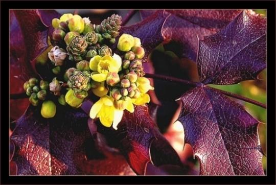 """фото """"Little things..."""" метки: природа, макро и крупный план, цветы"""