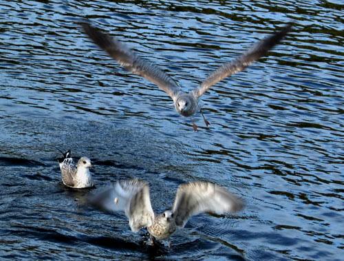 "фото ""Starts at Ladoga Lake"" метки: природа, дикие животные"