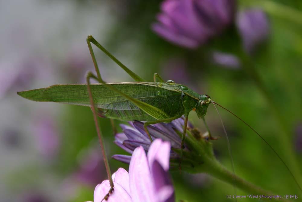 """фото """"Up close and personal !"""" метки: макро и крупный план, природа, насекомое"""