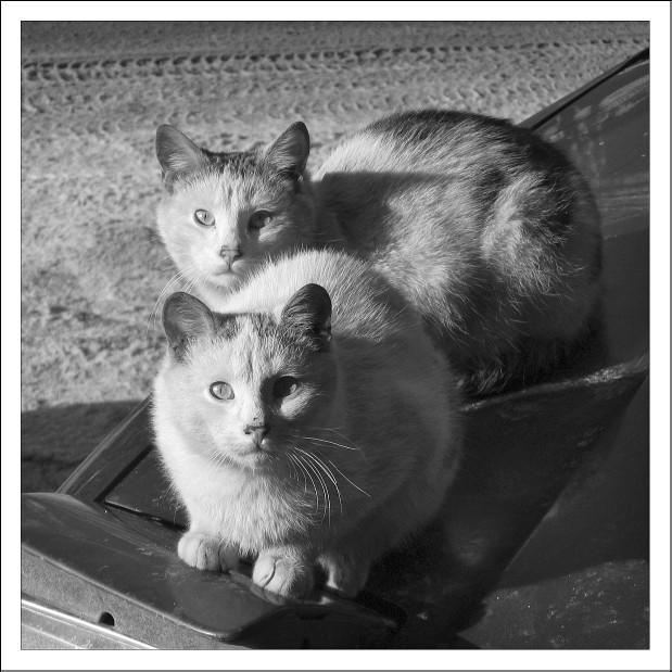 """фото """"street cats"""" метки: природа,"""