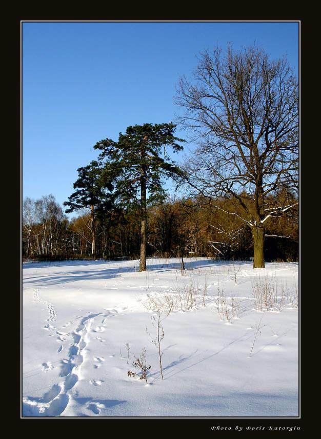 """фото """"2005. Зимний этюд-2"""" метки: пейзаж, зима, лес"""