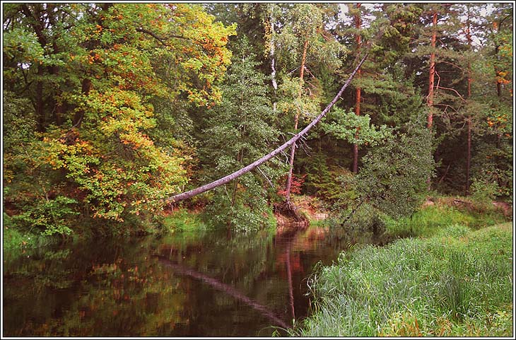 """фото """"Осень в Мещере"""" метки: пейзаж, вода, осень"""