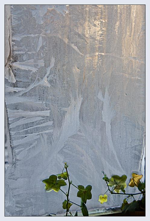 "фото ""Ice flowers"" метки: натюрморт, природа, цветы"