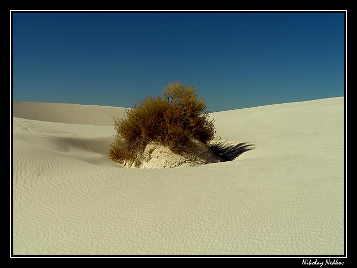 "фото ""Alone"" метки: природа, цветы"
