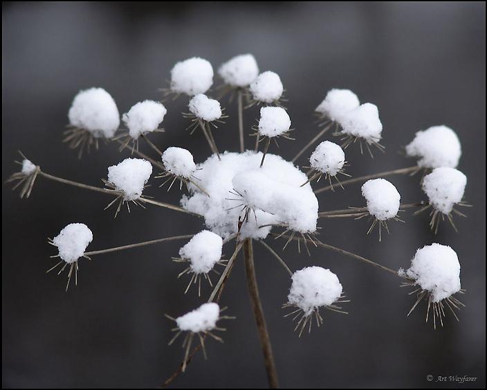 """фото """"Winter flower"""" метки: макро и крупный план,"""
