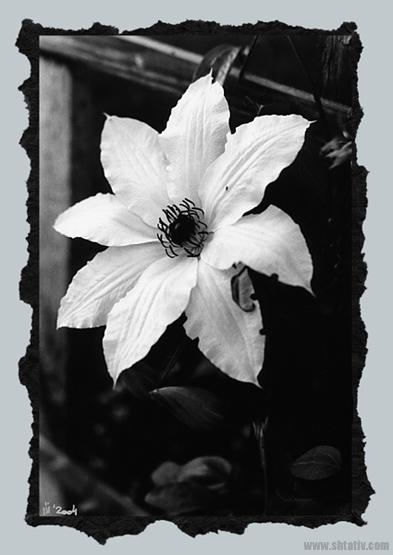 """фото """"Макро#22"""" метки: черно-белые, макро и крупный план,"""