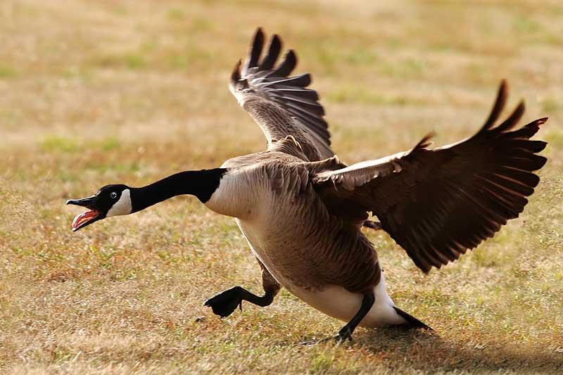 "фото ""Wild Landing"" метки: природа, дикие животные"