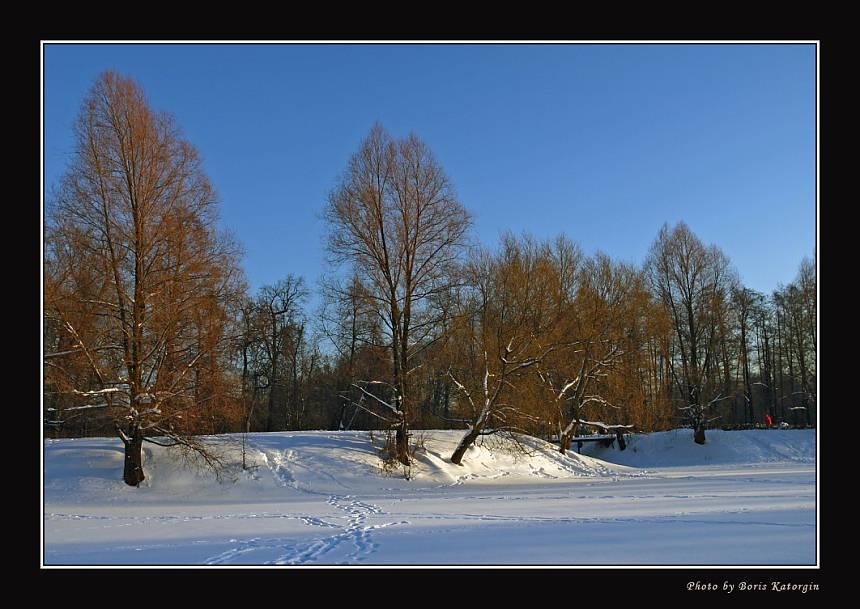 """фото """"2005. Зимний этюд-3"""" метки: пейзаж, зима, лес"""