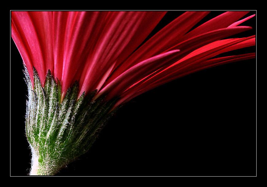 """фото """"MiniGerb #01"""" метки: природа, макро и крупный план, цветы"""