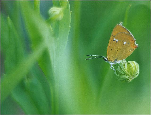 """фото """"Простая история."""" метки: природа, макро и крупный план, насекомое"""