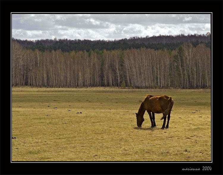 """фото """"Первая трава"""" метки: природа, пейзаж, весна, домашние животные"""
