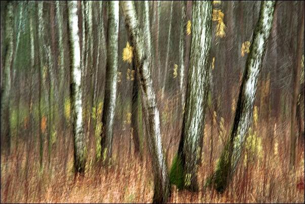 """photo """"Impressionism #14"""" tags: landscape, portrait, forest"""