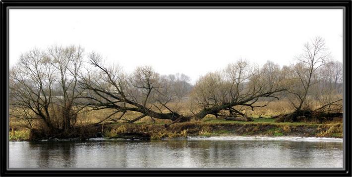 """фото """"Старая верба у реки, или разделённая надвое."""" метки: пейзаж, природа, вода, цветы"""
