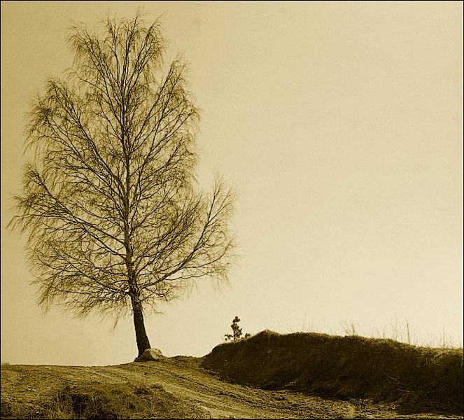 """фото """"ОДИНОЧЕСТВО."""" метки: природа,"""