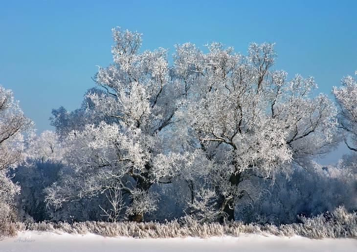 """фото """"Лучший день этой зимы."""" метки: пейзаж, зима, лес"""