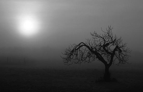 """фото """"untitled"""" метки: природа,"""