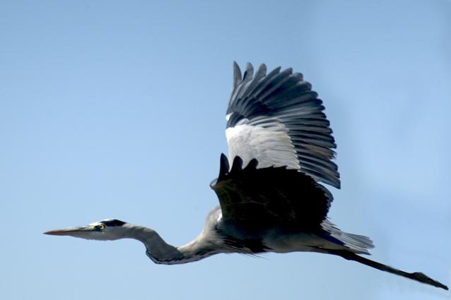 "фото ""Heron"" метки: природа, путешествия, Африка"