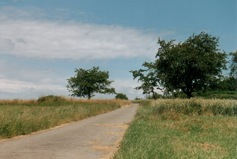 "фото ""По дороге с облоками"" метки: пейзаж, лето, облака"