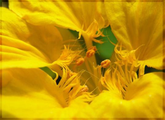 """фото """"In heart of a flower next"""" метки: макро и крупный план, природа, цветы"""