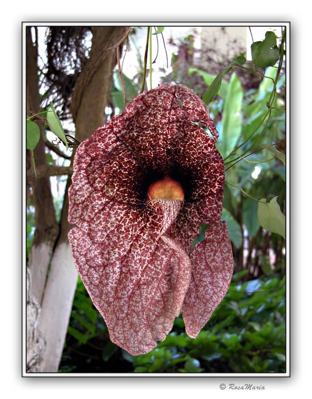"фото ""Strange Flower"" метки: путешествия, природа, Южная Америка, цветы"