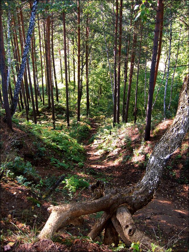 """фото """"[NAT] III"""" метки: пейзаж, лес"""