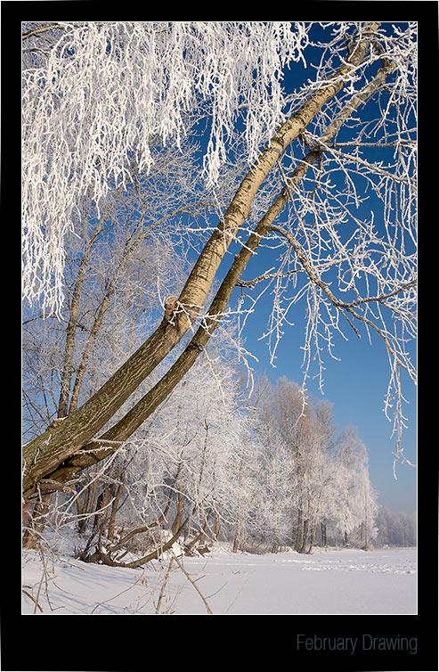 """фото """"Февральские узоры"""" метки: пейзаж, зима, лес"""