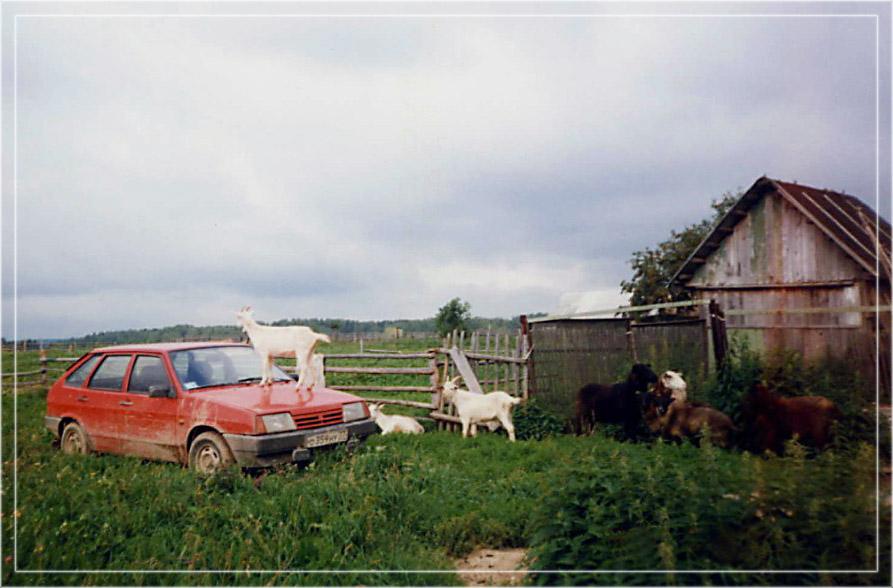 """фото """"А вот и козы"""" метки: природа, пейзаж, домашние животные, лето"""