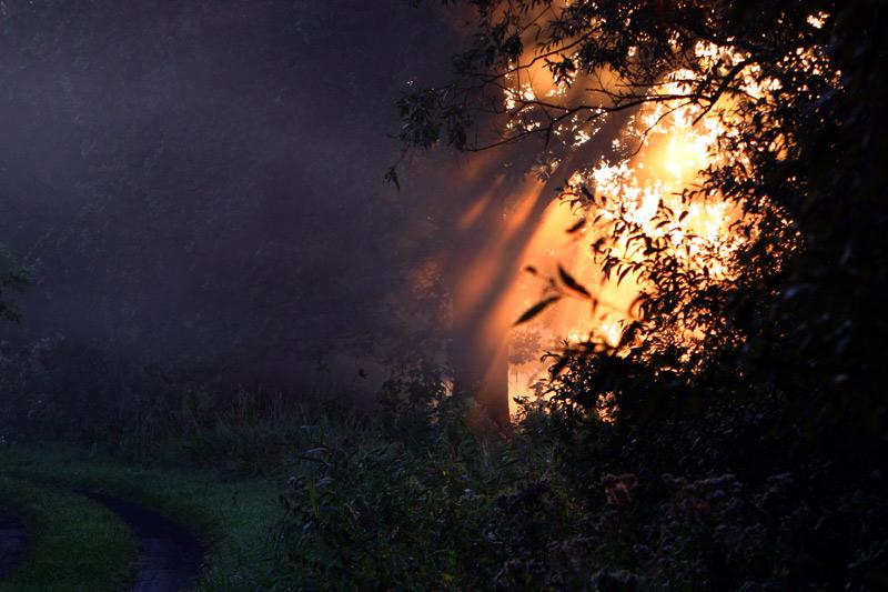 """фото """"The entrance to the paradise"""" метки: пейзаж, закат, лес"""