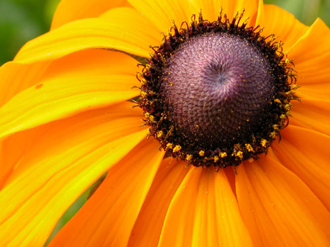 "фото ""Санни"" метки: природа, цветы"