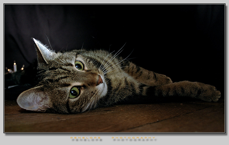 """photo """"The Portrait of the Cat II"""" tags: nature, pets/farm animals"""