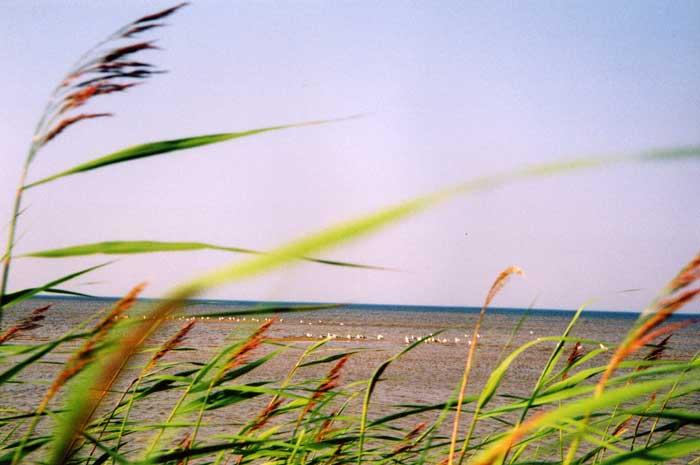 "photo ""*"" tags: nature, landscape, summer"