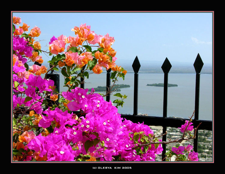 """фото """"Colors of Cartagena!"""" метки: природа, пейзаж, лето, цветы"""