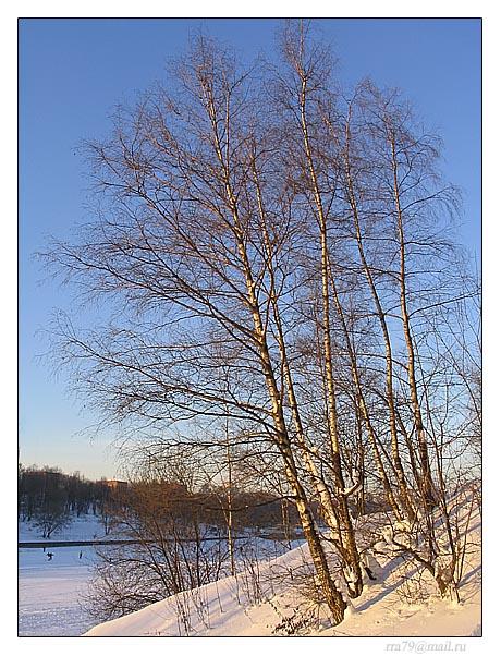"""фото """"Одинокая берёза..."""" метки: пейзаж, природа, зима"""