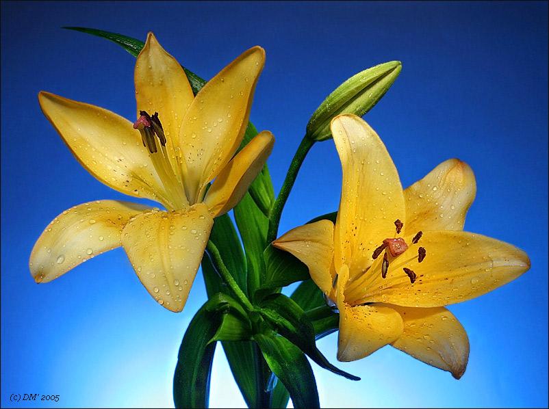 "фото ""**"" метки: природа, натюрморт, цветы"