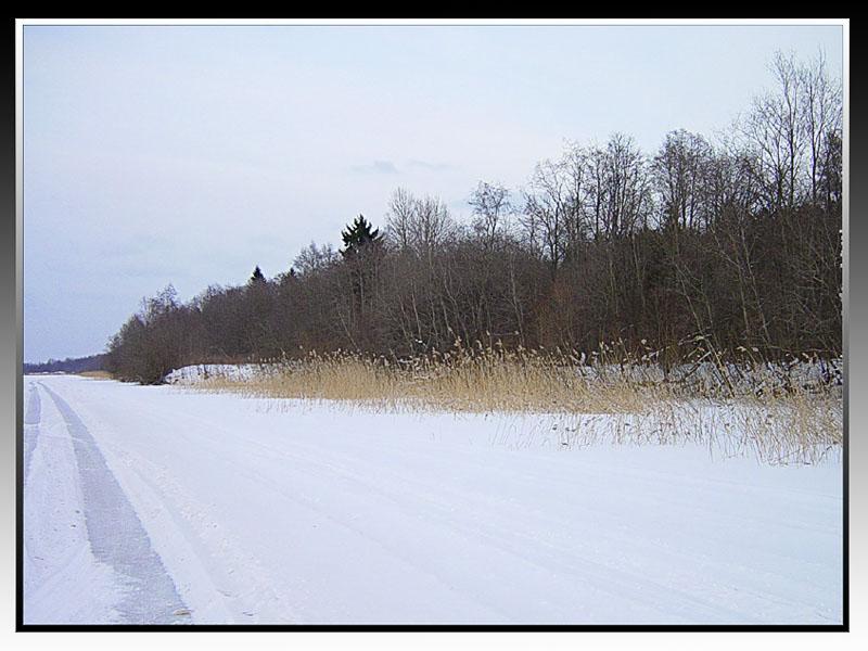 """фото """"Зимний день (2)"""" метки: пейзаж, зима, лес"""
