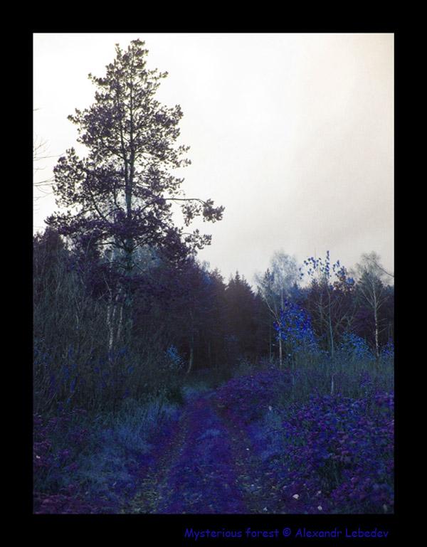 "фото ""mysterious forest"" метки: разное,"