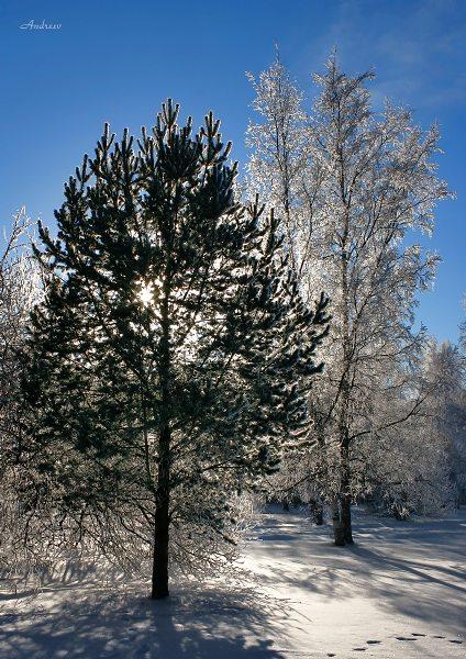 """фото """"Свет и тень."""" метки: пейзаж, зима"""